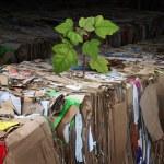 Eco Friendly Tree — Stock Photo