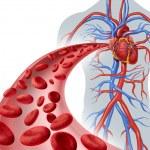 Blood Heart Circulation — Stock Photo