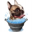 Dog Bath — Stock Photo #49235607