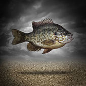 Fish Out Of Water — Stock Photo