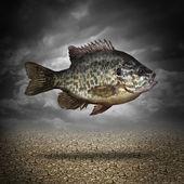 Peixe fora de água — Foto Stock
