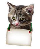 Cat Kitten Blank Card — Stock Photo