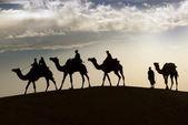 Camello en el desierto de thar — Foto de Stock
