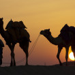 Постер, плакат: Desert people walk with camels