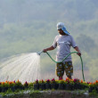 Man uses a garden hose to water flowers — Stock Photo #50887019