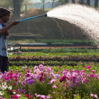 Man uses a garden hose to water flowers — Stock Photo #50887207