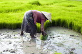 Farmer working on the field — Stock Photo