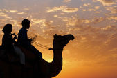 Children on a camel's back — Stock Photo