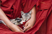 Кот спит — Стоковое фото