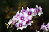 Bunch of orchids — Stock Photo