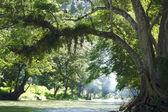 Albero sulla riva del fiume — Foto Stock