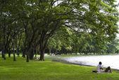 Люди в парке — Стоковое фото