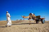 Cameleer at Sam Sand Dune — Stock Photo