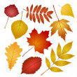 Stock Vector: Autumn leaves isolated on white background