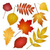 秋天的叶子上孤立的白色背景 — 图库矢量图片