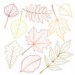 Autumn leaves — Stock Vector #13125961