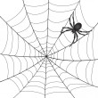 A Spiderweb with Spider - Stock Vector