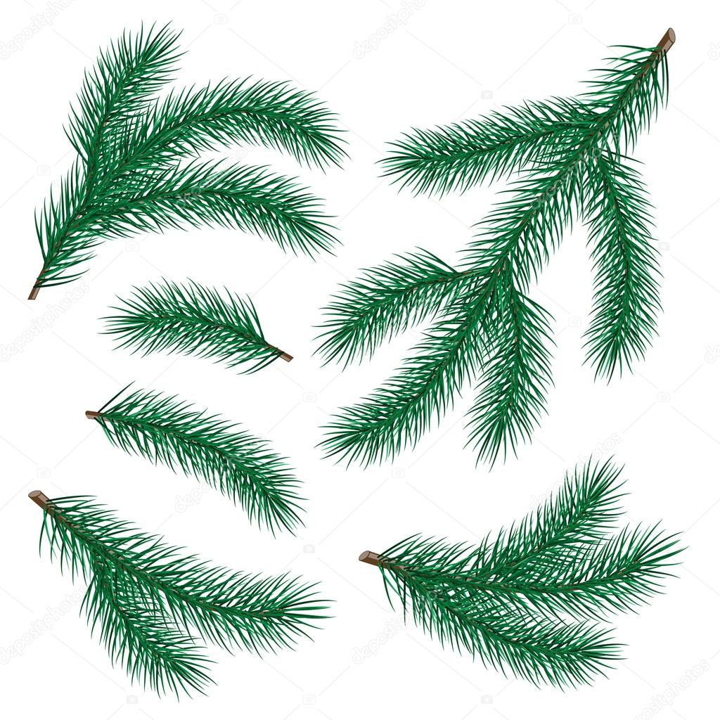 Set of fir branch on white background. vector illustration — Stock Vector #14210171