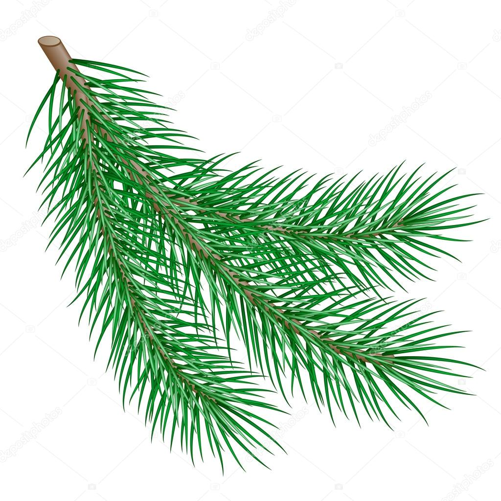 Branch on white background. vector illustration — Stock Vector #14234479