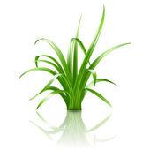 Green grass, vector — Stock Vector