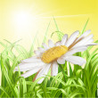 Green grass with daisy - summer background. — Stock Vector