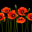 Red poppies in a row. — Stock Vector