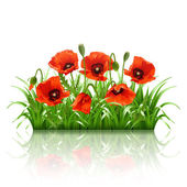 Red poppies in grass., vector — Stock Vector