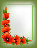 Red poppies floral frame, vector — Stock Vector