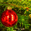 Stock Photo: Christmas red globe on green tree