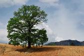 Изолированное дерево с пасмурное небо — Стоковое фото
