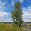 Birch against spring landscape. On the lake. — Stock Photo