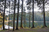 View of the lake from the thicket Sinevir forest. — Stock Photo