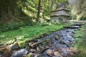 Mountain forest stream flows near the wooden house. — Stock Photo