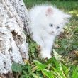 Stock Photo: White kitten in park climbs tree.