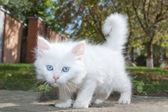 Bianco carino gattino nel parco. — Foto Stock