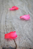 Petals of pink roses on a wooden texture. — Stock Photo