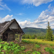Abandoned wooden barn in the mountains and forest. In the Carpat — Stock Photo