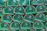 Depeše loví chobotnice a ryb, close-up. — Stock fotografie