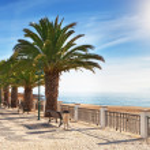Boulevard on the beach with palm trees near the ocean. — Stock Photo