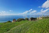 Beautiful sea landscape with grass in the area of Portimao, Portugal. — Stock Photo