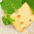 A slice of delicious Dutch cheese on a background of grape leave — Stock Photo
