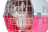 Pet cat trapped in a cage for a veterinarian. — Photo