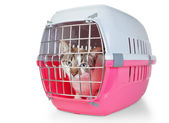 Box with a cat cage for transport. On a white background. — Stock Photo