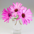 Bouquet of flowers osteospermum in a vase on a gray background. — Stock Photo