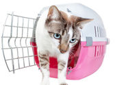 Homemade cute cat out of the cage. On a white background. — Stock Photo