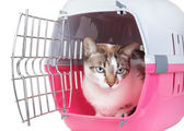 Cute cat sitting home watching from the cell. On a white backgro — Stock Photo