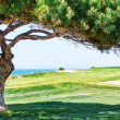 Stock Photo: Decorative pine tree on golf course near sea.