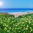 Chamomile field and the grass on a background of the sea. For th — Stock Photo #24692037