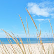 Stock Photo: On summer beach kind of grass on background of sky and sea