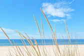 On the summer beach kind of grass on a background of sky and sea — Stock Photo